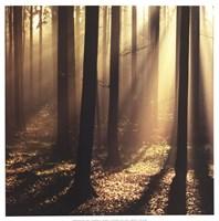 Sunlight and Trees II Fine-Art Print