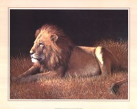 Majestic Lion Framed Print