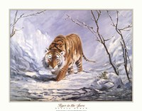 Tiger In The Snow Fine-Art Print