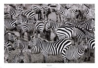 Zebras Abstraction Fine-Art Print