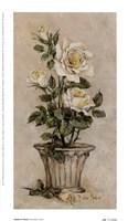 Shades Of Roses l Fine-Art Print