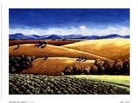 Winter Oaks And Vineyards Fine-Art Print