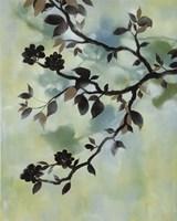 Evening Shadows II Fine-Art Print