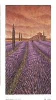 Soleil De Provence I Fine-Art Print