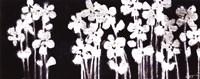 White Flowers on Black I Fine-Art Print