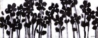 Black Flowers on White II Fine-Art Print