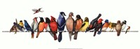 Large Bird Menagerie Fine-Art Print