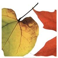 Inflorescent Leaves I Fine-Art Print