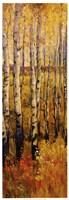 Vivid Birch Forest II Fine-Art Print
