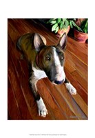 Bull Terrier Down Fine-Art Print