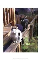 Cats Fencing Fine-Art Print