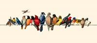 Bird Menagerie III Fine-Art Print