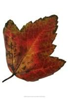 Leaf Inflorescence I Fine-Art Print
