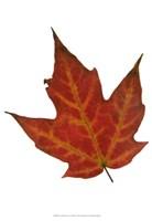 Leaf Inflorescence V Fine-Art Print