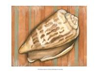 Shell on Stripes III - light Fine-Art Print