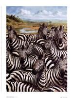 Zebra Gathering Fine-Art Print