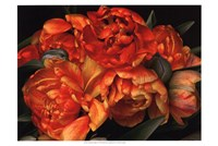 Old World Tulips II Fine-Art Print