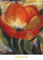 Summer Tulips I Fine-Art Print