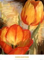 Summer Tulips II Fine-Art Print