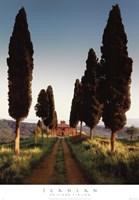 Cypress Lane Fine-Art Print