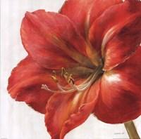 Vivid Amaryllis Fine-Art Print