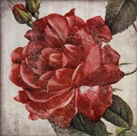 Rose Flower Fine-Art Print