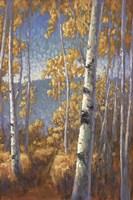 Aspen Forest II Fine-Art Print