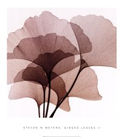 Ginko Leaves II Fine-Art Print
