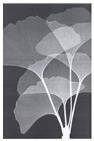 Ginkos I Fine-Art Print