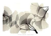 Ginko Dance Fine-Art Print