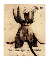 Fig. 8a Fine-Art Print