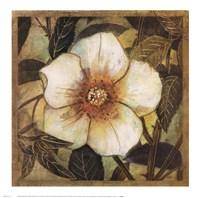 White Magnolia I Fine-Art Print