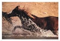 Running through Water Fine-Art Print