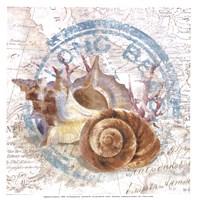 Seashells By The Seashore I Fine-Art Print