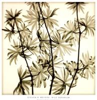 Wild Geranium Fine-Art Print