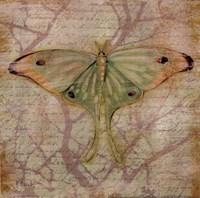 Vintage Butterflies III Fine-Art Print