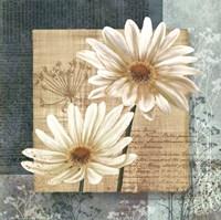 Daisy Field I Fine-Art Print