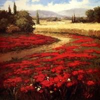 Red Poppy Trail Fine-Art Print