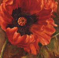 Red Poppy Fine-Art Print