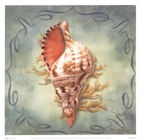 Seashells I Fine-Art Print