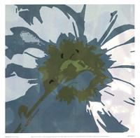 Daisy Square II Fine-Art Print