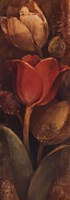 Tulip Shadows II Fine-Art Print