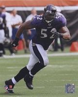 Ray Lewis 2010 Action On The Field Fine-Art Print