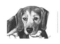 Lindy the Beagle Fine-Art Print