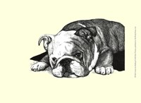 Gracie the Bulldog Fine-Art Print