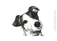 Robbie the Jack Russell Fine-Art Print
