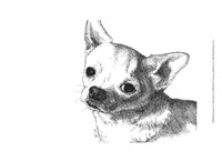 Bruiser the Chihuahua Fine-Art Print