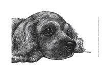Charlie the Cocker Spaniel Fine-Art Print