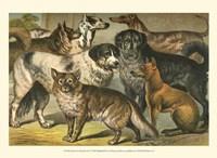 Johnson's Dog Breeds I Fine-Art Print