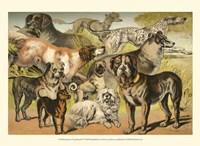 Johnson's Dog Breeds II Fine-Art Print